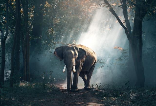 La butaca amarilla que se transforma en un elefante gris